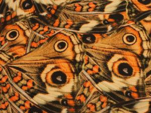 00888 300x225 Farfalla   esaurito