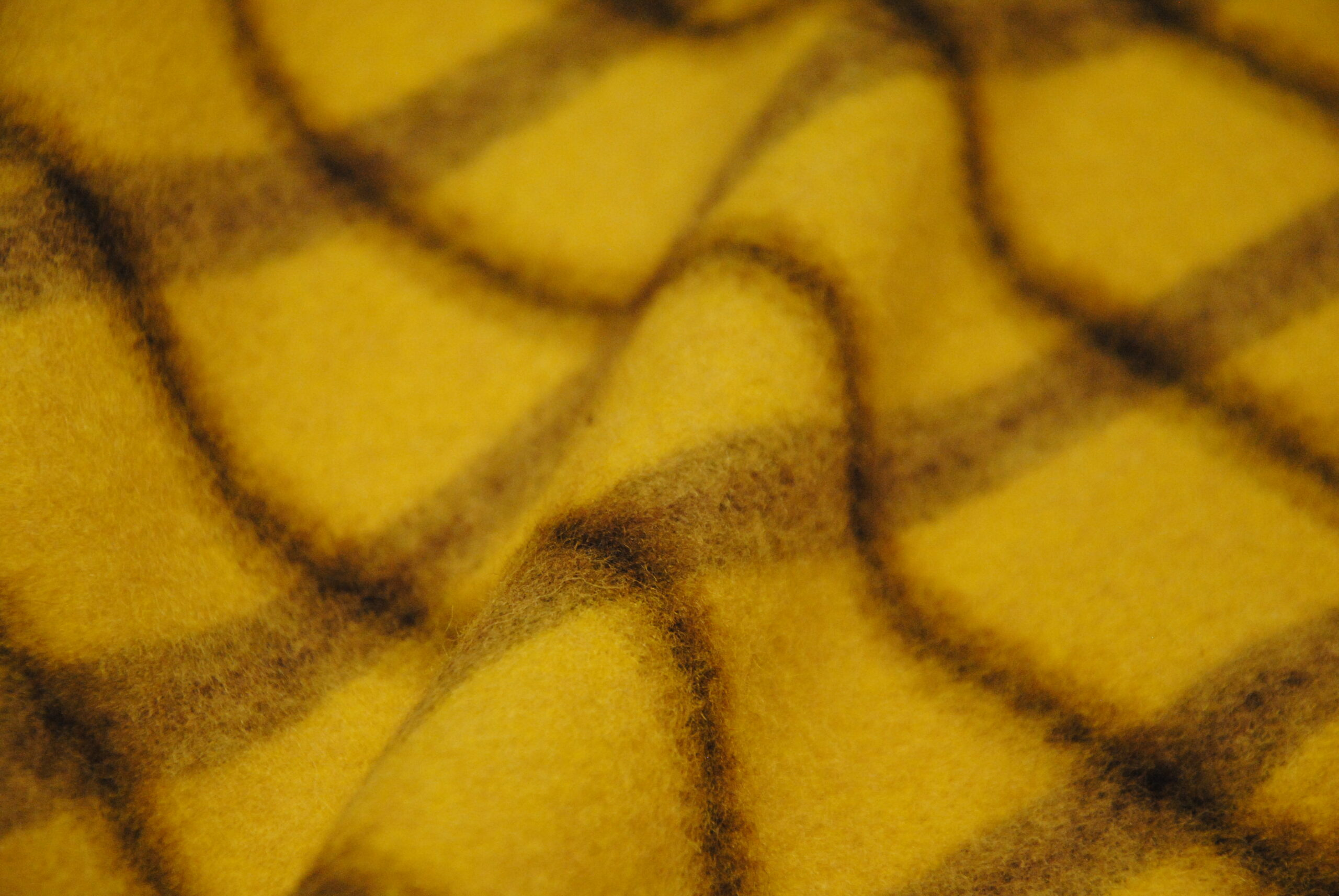 DSC 1356 2 scaled Yellow Mustard   LANA CAPPOTTO